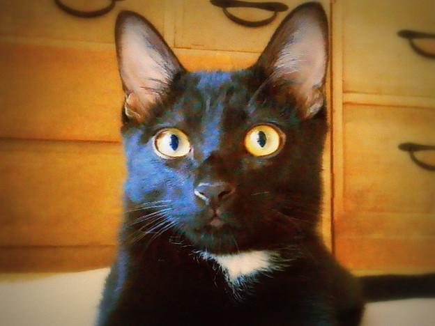 桐箪笥に黒猫。