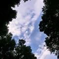 Photos: 木々の間から。