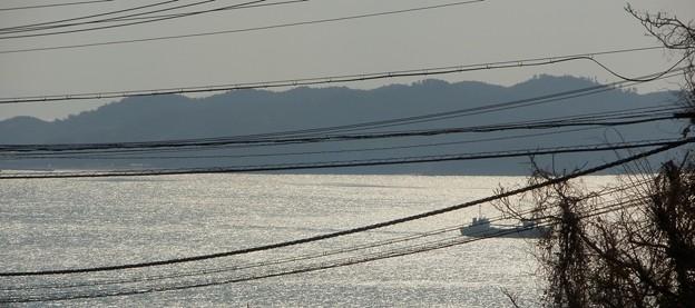 写真: 灘黒岩水仙郷16