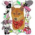 写真: 富山市からお越しの柴犬の夢ちゃんです。