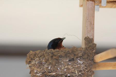 巣のお手入れ