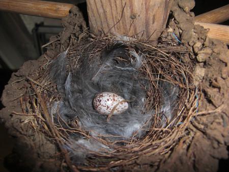 祝!一個目の産卵