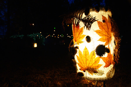 森林植物園 灯ろう